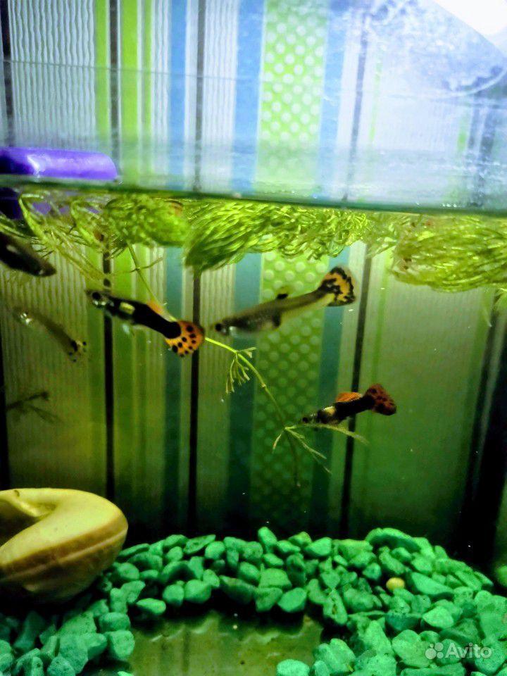 Рыба купить на Зозу.ру - фотография № 1