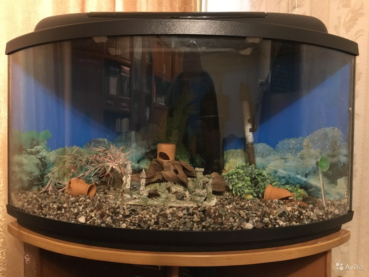 Аквариум угловой панорамный на 75 литров купить на Зозу.ру - фотография № 1