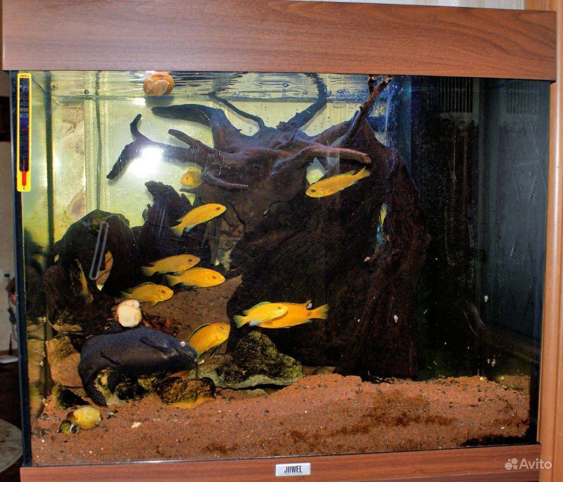 Дизайн аквариума купить на Зозу.ру - фотография № 8