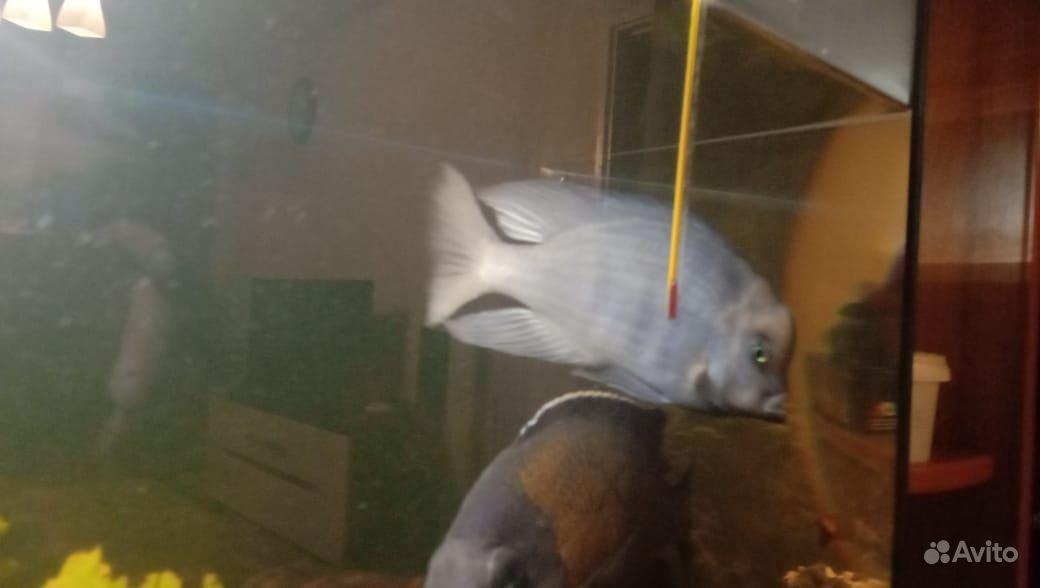 Рыба купить на Зозу.ру - фотография № 3
