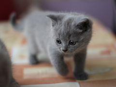 Объявление отдам в добрые руки вислоухих котят ишимбай работа новочеркасск свежие вакансии без посредников