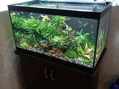 Аквариумные растения прополка