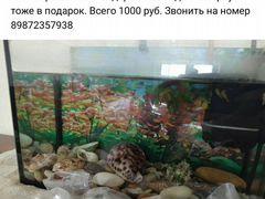 Продам аквариум с рыбаками гуппи