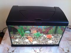 """Итальянский аквариум """"Ferplast"""" 40L.Рыбы+фильтр+"""