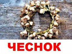Чесночек сибирский