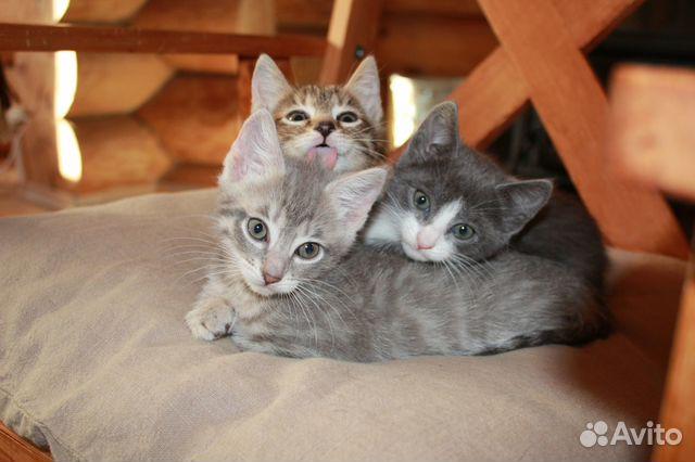 Авито котята в добрые руки ногинск