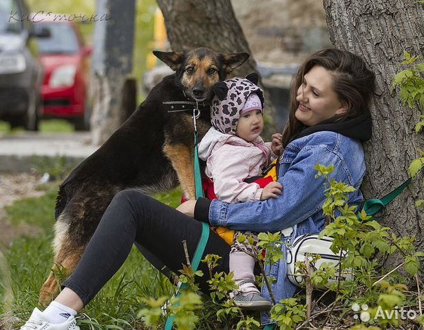 89137249811 Семейная собака Жужа