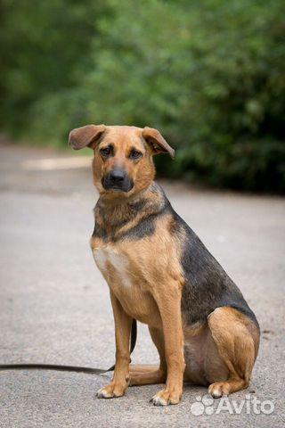 Ирма - добрая собака в добрые ручки купить на Зозу.ру - фотография № 1