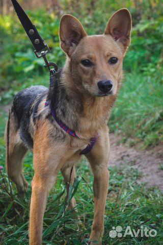Собака ищет дом купить на Зозу.ру - фотография № 5
