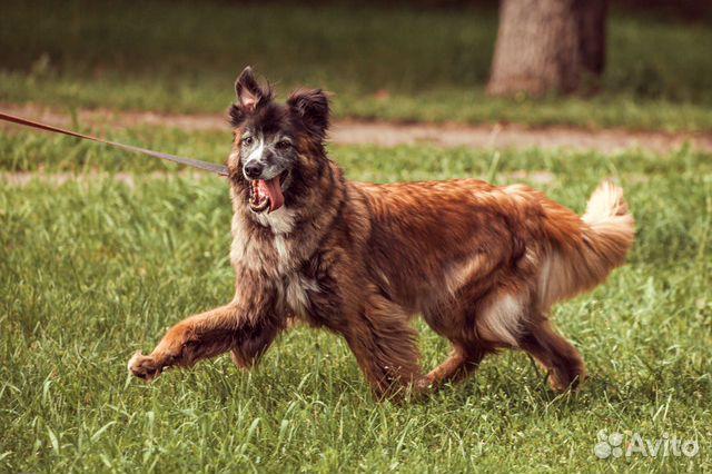 Добрый пес в добрые руки купить на Зозу.ру - фотография № 2