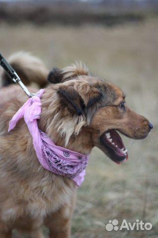 Собака из приюта в дар купить на Зозу.ру - фотография № 4