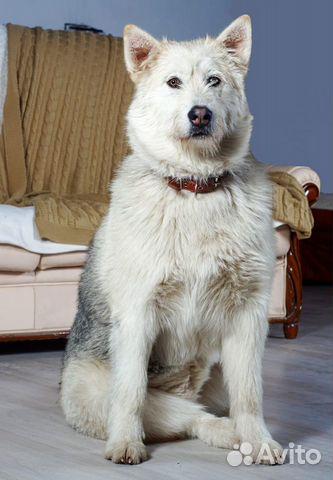 Юла потрясающая девчонка Собака в добрые руки купить на Зозу.ру - фотография № 7