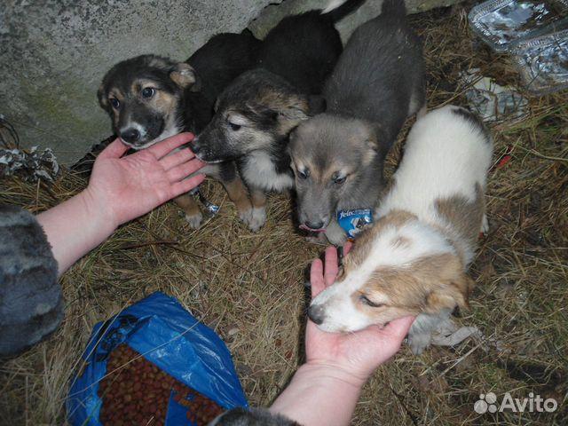 Щенки (дворняжки) в хорошие руки купить на Зозу.ру - фотография № 3