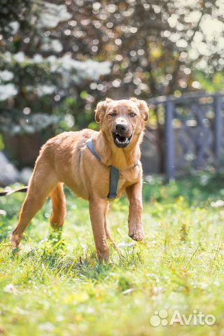 Отдам рыжего щенка в добрые руки купить на Зозу.ру - фотография № 4