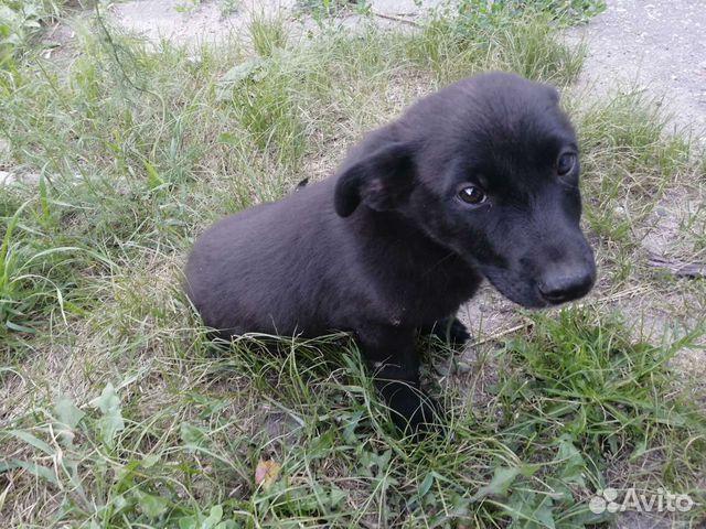 Собака  89606969258 купить 1