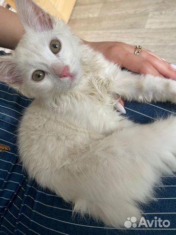 Котенок в добрые руки  89105802784 купить 3