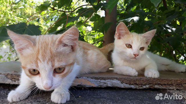 Котята в добрые руки  89787106687 купить 4