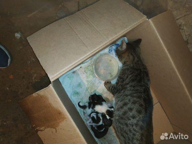 Кошка и 5-еро котят  89638099482 купить 5