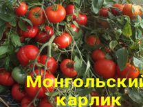 Семена томатов — Растения в Екатеринбурге