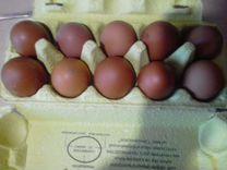 Инкубационное яйцо кур, гусей