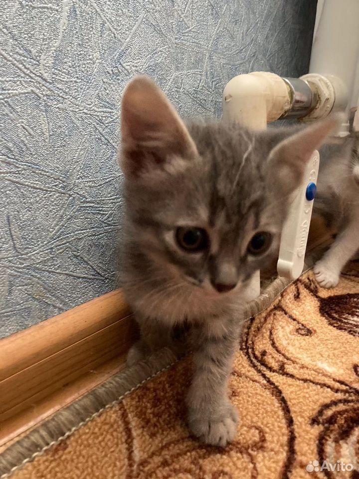 Отдадим котят в добрые руки  89050613439 купить 1