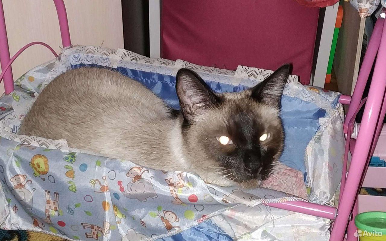 Потерялся сиамский кот
