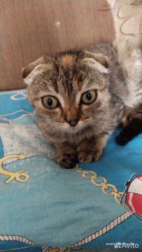 Кошка  89083193716 купить 2