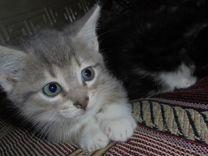 Отдам котят от кошки мышеловки
