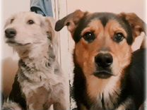 Верные Друзья собаки