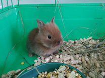 Карликовые малыши крольчата