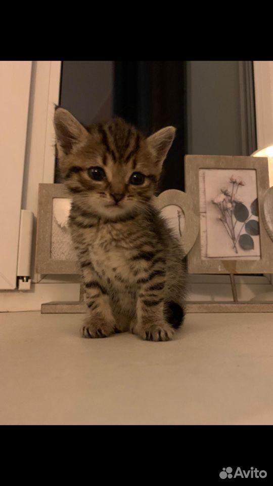 Котенок в добрые руки девочка  89618782390 купить 2