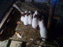 Продам кролов
