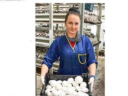 Работа по вемкам в богородицк вебкам девушка модель работа для девушек дома