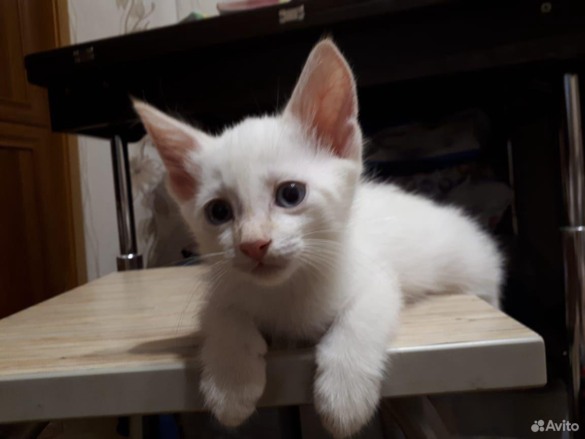 Кошка 89620780609 купить 6