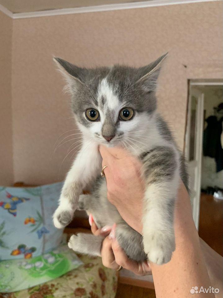 Котята в добрые руки бесплатно  89876955069 купить 3