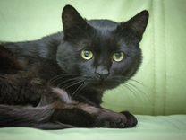Не везучий в прошлом, черный кот Валерьян ищет дом